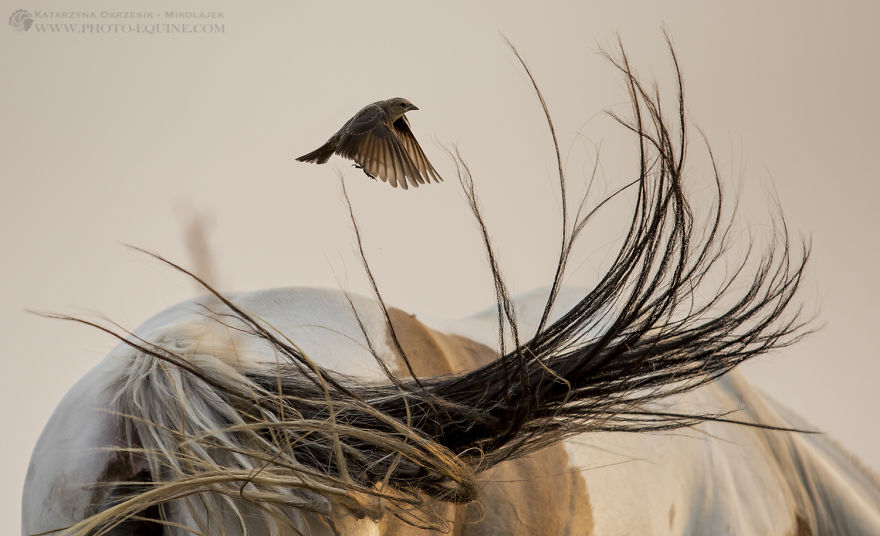 Feathered Guardians Of The Western Prairies