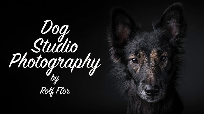 Dog Studio Photography – This Is How I Work!