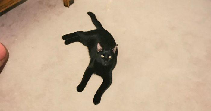 La forma en la que este gato volvió a casa tras pasar 5 años desaparecido es aún más increíble que el hecho en sí mismo