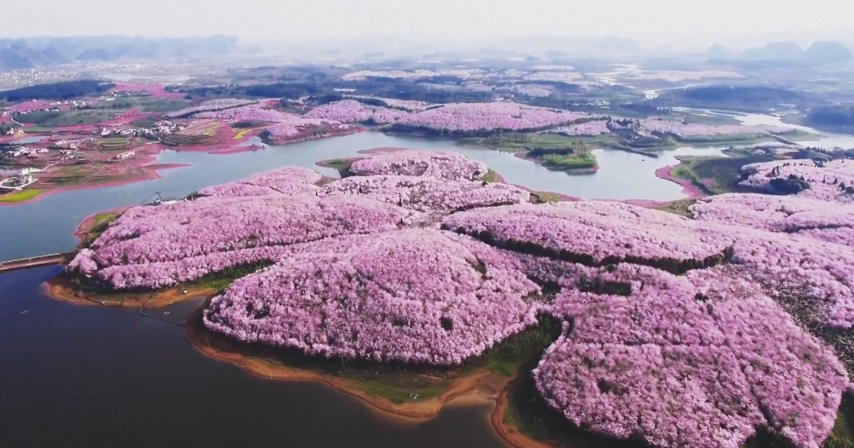 Cherry Blossoms Have Just Bloomed In China, And The Photos Will Take Your Breath Away