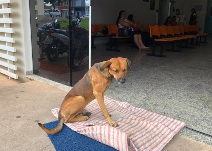 Dog Chases An Ambulance Carrying His Stabbed Owner Who Later Dies, Waits For 4 Months At The Entrance