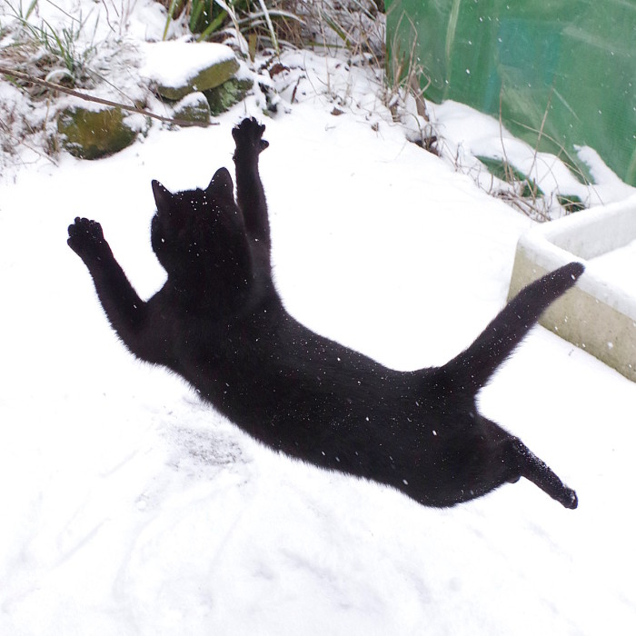Our Neighbour's Black Cat Came To Our Garden To Play, And Went Crazy In The Snow
