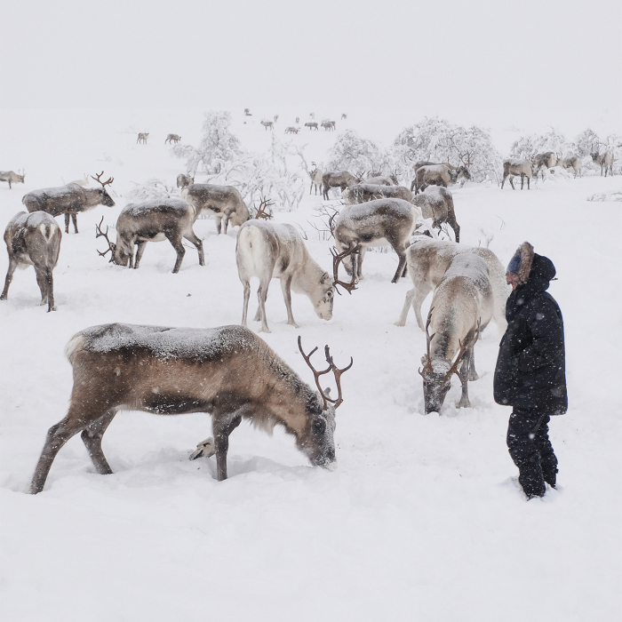 We Went Searching For Santa's Reindeer At -35 Degrees Celsius