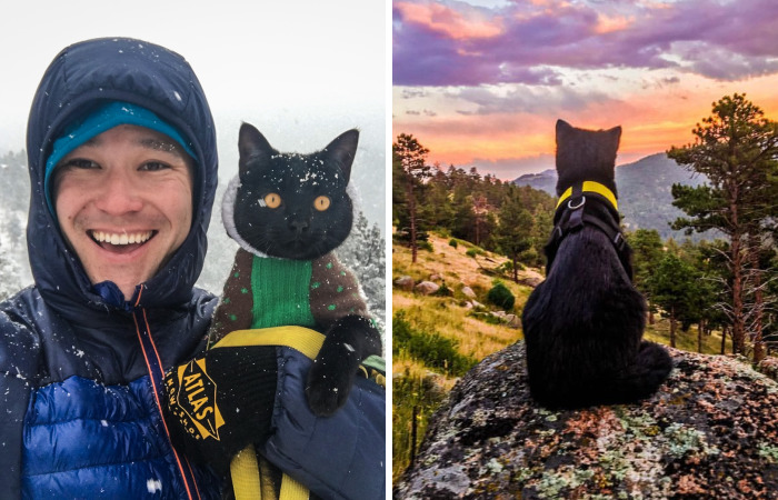 Meet Simon, Who Has Been Traveling With His Human For Two Years