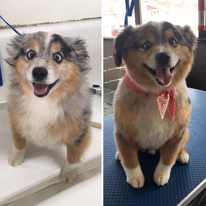 I Work As A Dog Groomer. This Pup Is Amazing