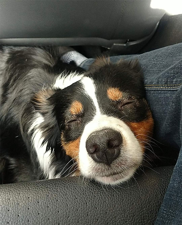 Had The Best Passenger On The Ride Home Yesterday
