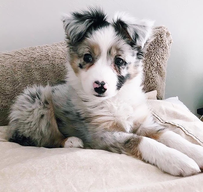 So Cute, I Wanna Cuddle