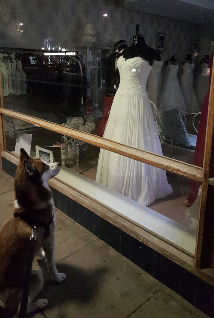 Inside Every Husky Is A Little Girl Who Dreams Of Her Big Day
