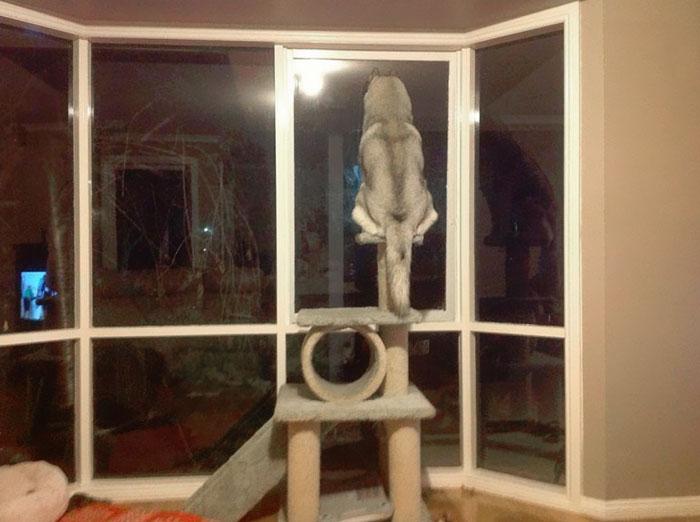 Perro adaptándose a unos dueños de gatos