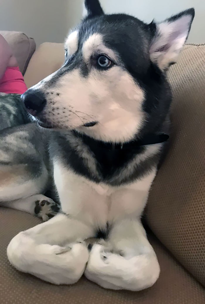 My Oldest Husky, Lykos, Does This All The Time