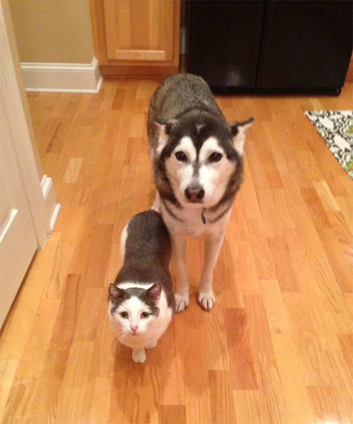 Hermanos de distinta madre