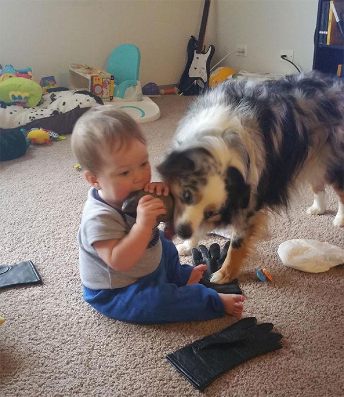 Like Baby Like Dog