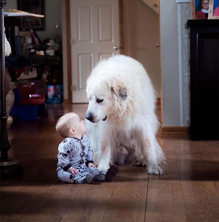Mi hijo de 7 meses jugango, y el perro de mi esposa fue a sentarse a su lado