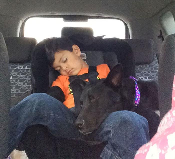 Mi hijo y el perro que adoptamos hace 20 minutos