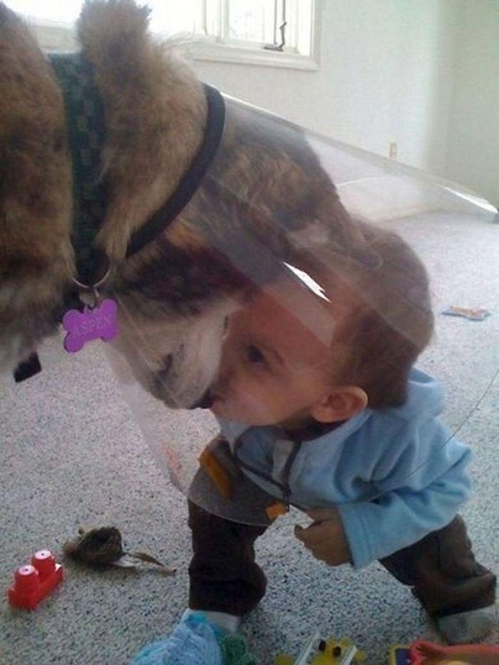 Der Hund war nicht begeistert von dem Schrim, aber zum Glück hatte er jemanden, der ihn aufgemuntert hat