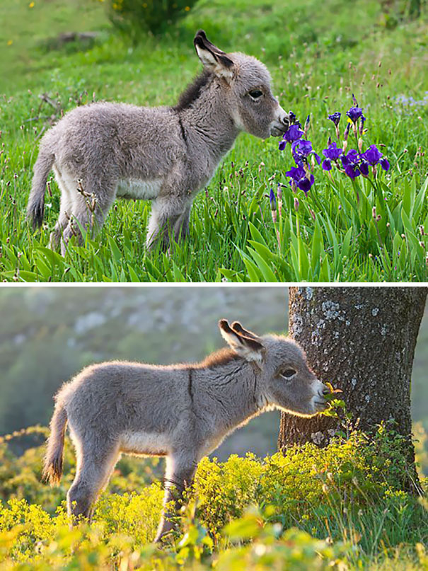 Baby Donkey Smelling Flowers