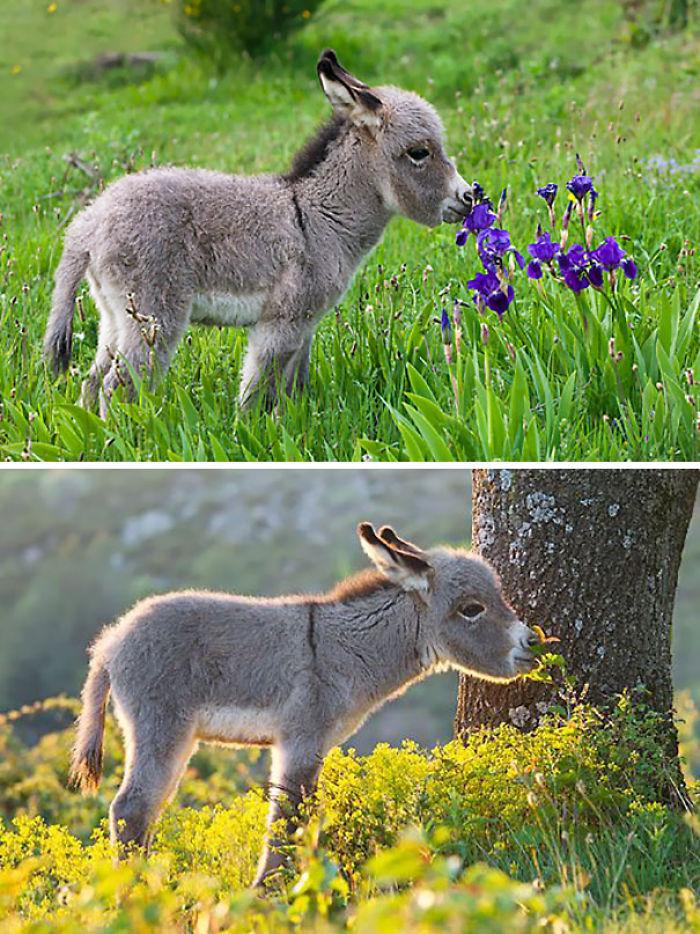 Baby Donkey Smelling Flowers
