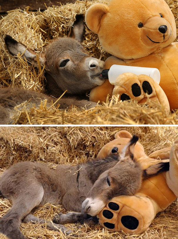 These 156 Cute Baby Donkeys Are Everything You Need To See