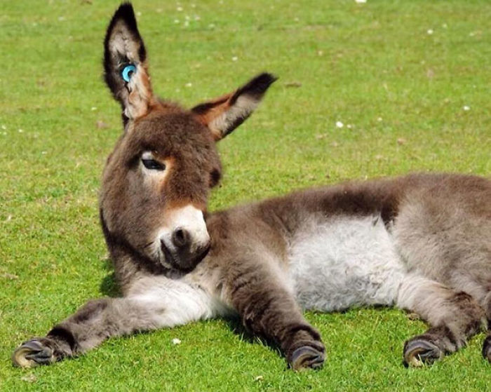 Baby Donkey Relaxing In The Sun