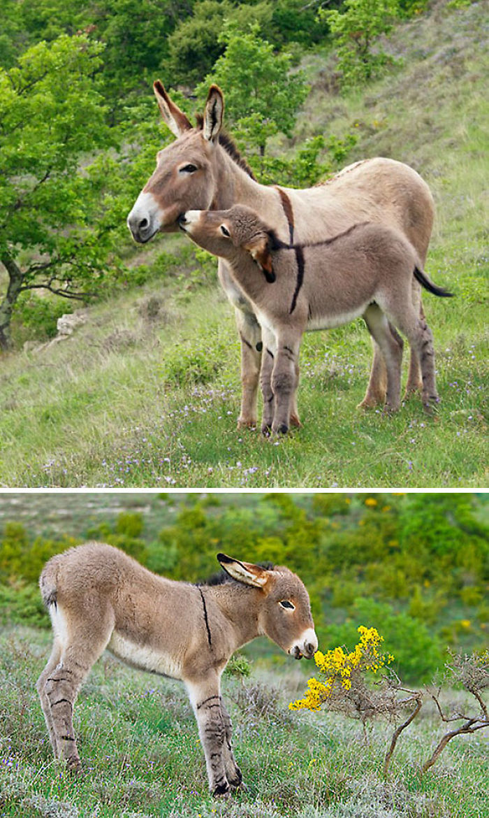 Curious Baby Donkey