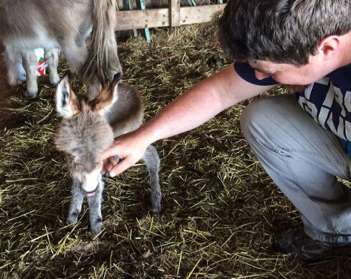 Lo encontraron en el granero y fue totalmente inesperado
