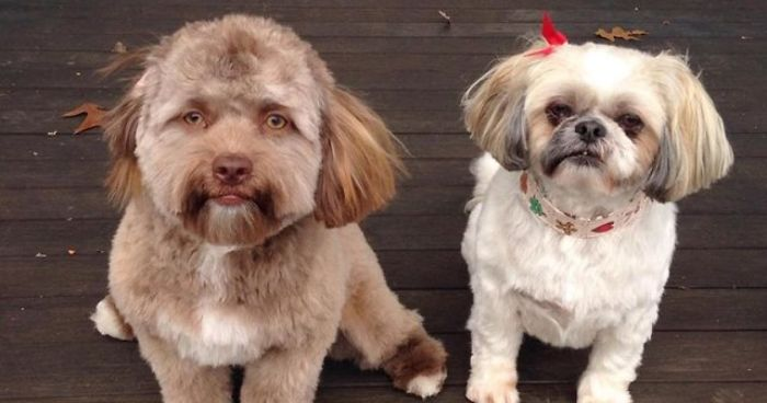 This Dog Has A 'Human Face' And It Will Make You More