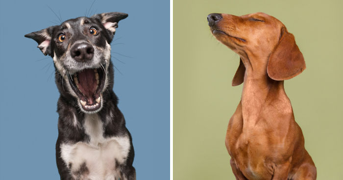 I Photograph Dogs To Show How Unique Every Single Of Them Is