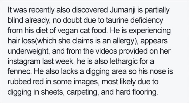 fennec-fox-vegan-diet-animal-abuse-jumanji-sonia-sae-42