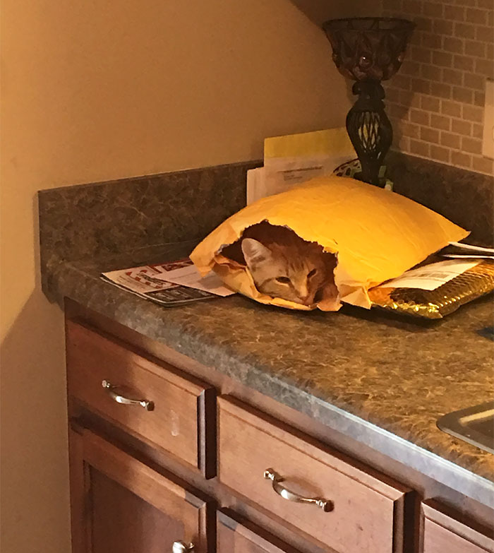 Mojo Does Not Care About Your Mail. Mojo Is A Grown Man And Does What He Wants To Do
