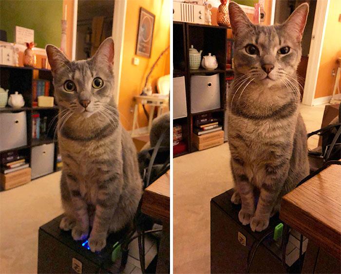 Si tienes un gato, no compres una cpu con los botones hacia arriba. 40 minutos de trabajo perdidos