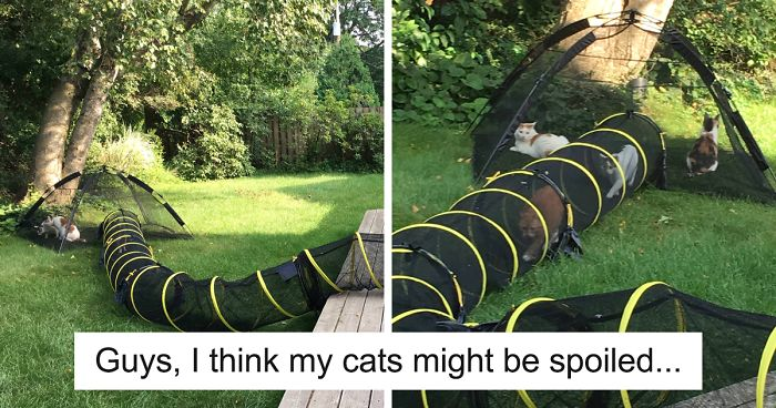 25+ Hilarious Cat Snapchats That Will Leave You With The Biggest Smile (New Pics)