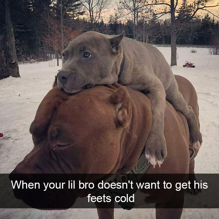 Funny-Dogs-Photos-Snapchats