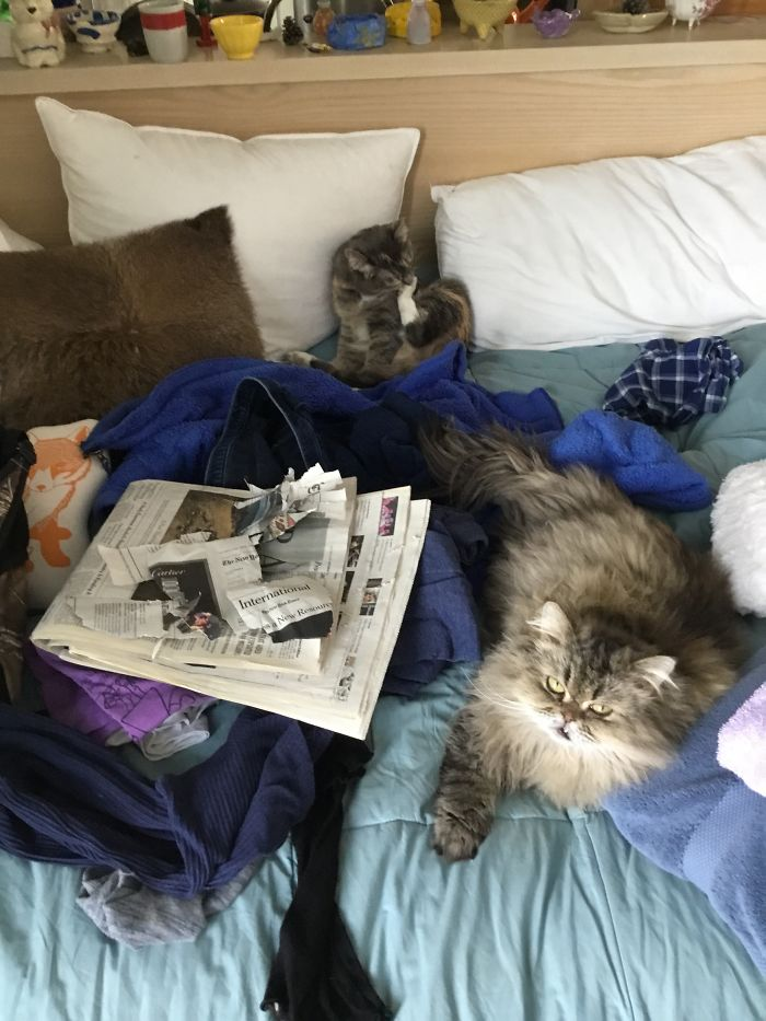 You Want To Read The News? Nope. (Bonus: In The Middle Of My Clean Clothing)