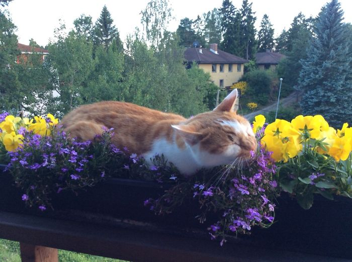 Must He Lie On The Flowers In Order To Enjoy Them?