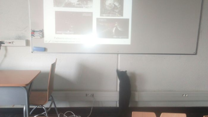 "When Your ""Mr I Know Better Than You"" Cat Won't Stop Teaching Phd Teachers How To Teach Ethology At Uni"
