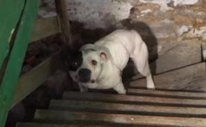 Este hombre quedó sorprendido al encontrar un perro encadenado en el sótano de su casa recién comprada, la reacción del perro lo dice todo