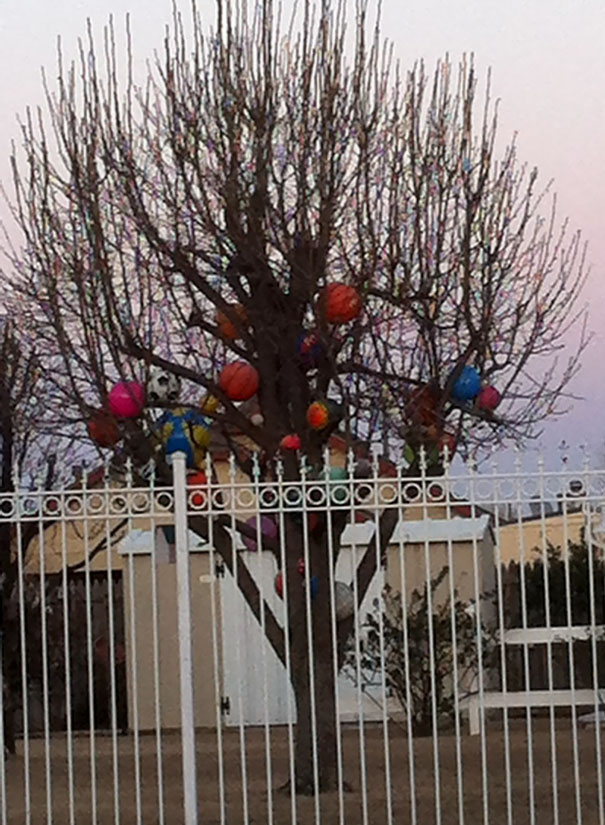 Whenever A Ball Goes Into My Neighbors Yard, He Puts Them In His Tree So No One Can Get Them Back