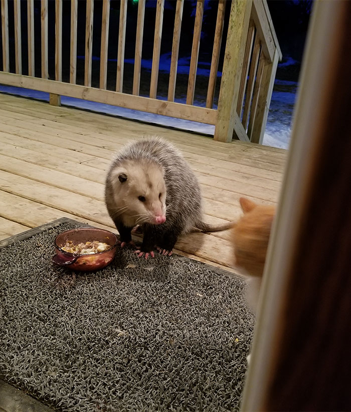 how to stop possums eating roses