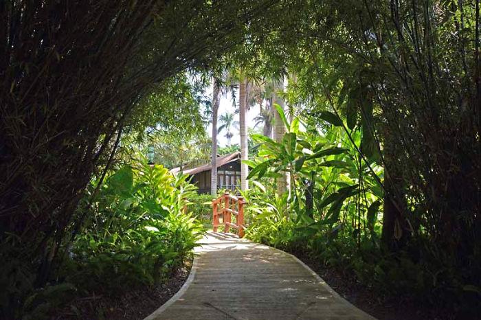 Tree House Resort In Jamaica