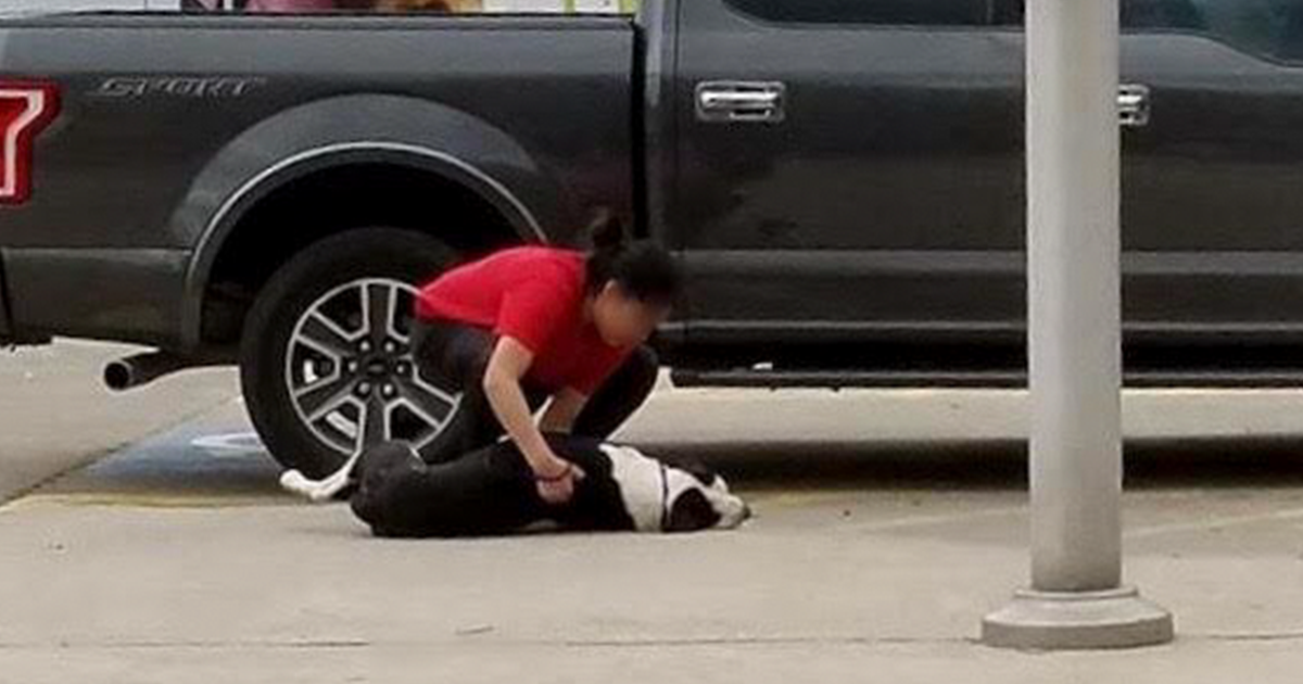 Woman Captures Scared Dog Getting Dragged Into Kill Shelter By Owner, And His Reaction Will Break Your Heart