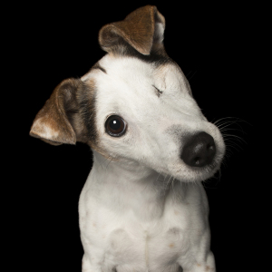 Photographer Takes Portraits Of Dogs That Are Perfectly Imperfect