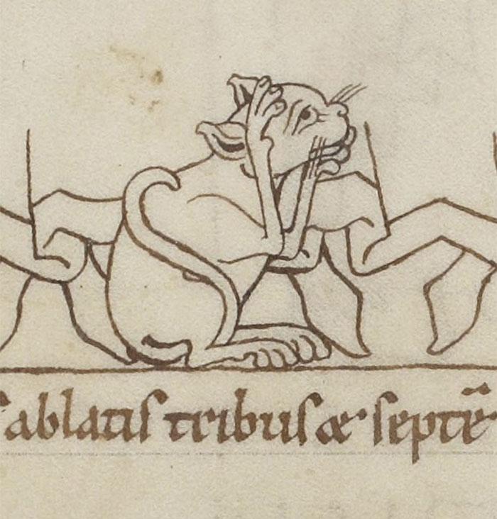 Medieval OMG Cat