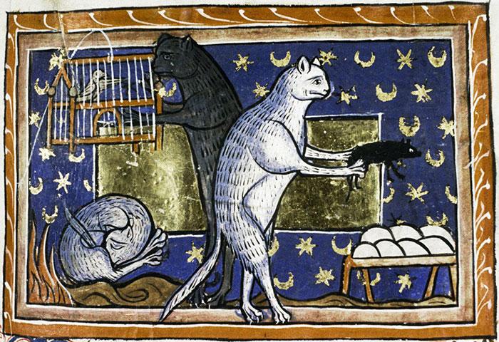 Casual Cat Life