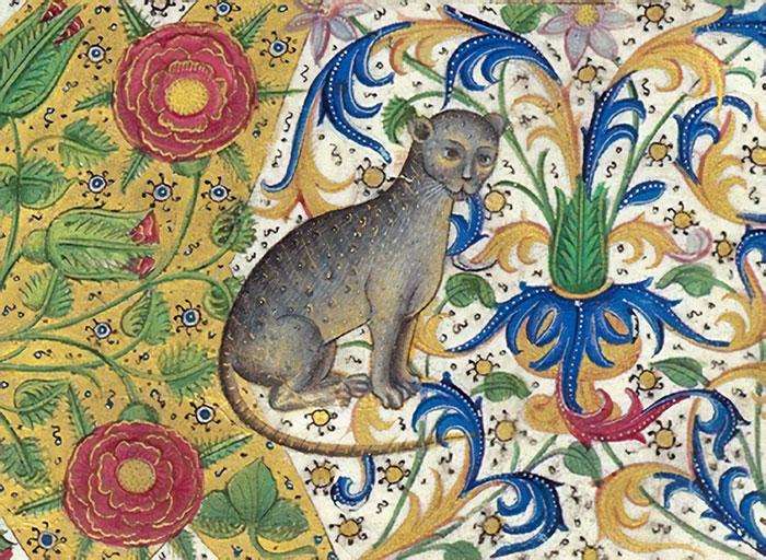 Floral Border Cat