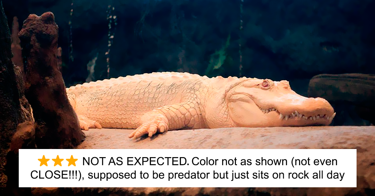 Zoos Are Posting Hilarious Amazon-Like Reviews Of Their Animals, And We Can't Get Enough