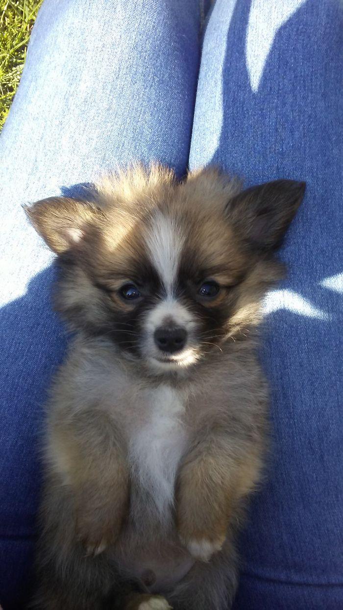 My Sweet Little Odin