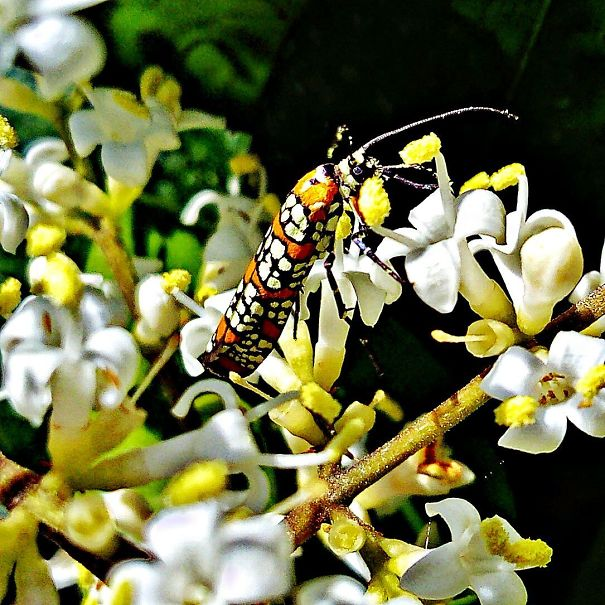 180409-Moth-Atteva-aurea-5acec29ded63a-jpeg.jpg