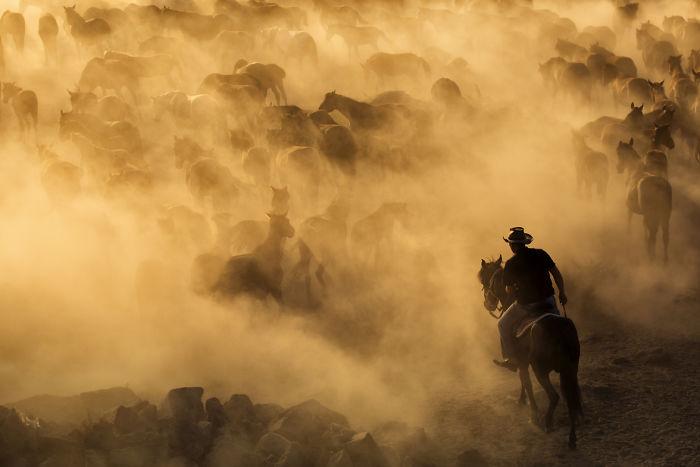 Wild Horses Of Cappadocia