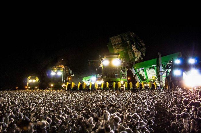 Esta multitud en un concierto es en realidad una máquina recolectora de algodón de noche