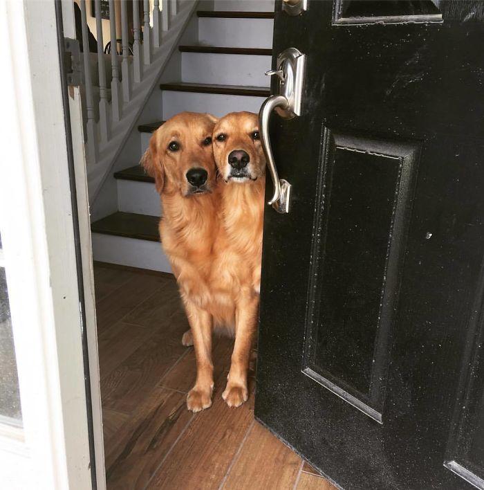 Parece que mis perros se han fusionado